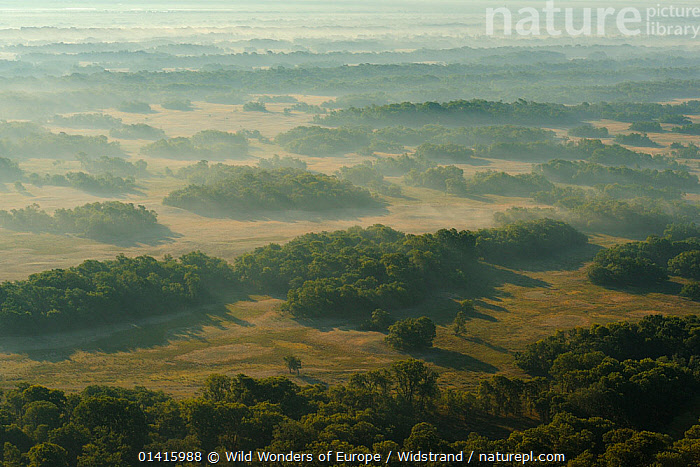 Aerial view over the Letea forest at dawn, Danube delta rewilding area, Romania, June 2012  ,  AERIAL VIEW,AERIALS,ATMOSPHERIC,CALM,DANUBE,DAWN,DELTA,EASTERN EUROPE,EUROPE,FORESTS,HABITAT,LANDSCAPES,PEACEFUL,PROTECTED,RESERVE,REWILDING,STAFFAN WIDSTRAND,SUNRISE,TREES,WETLANDS,WOODLANDS,WWE,PLANTS  ,  Wild Wonders of Europe / Widstrand