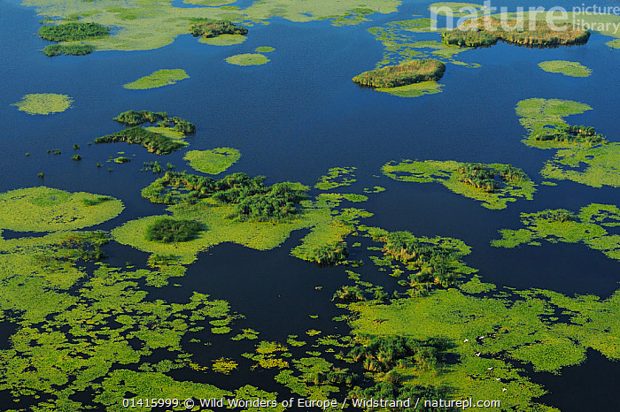 Aerial view over the Danube delta wetlands rewilding area, Romania June 2012  ,  AERIALS,DANUBE,DELTA,EASTERN EUROPE,EUROPE,HABITAT,LANDSCAPES,REWILDING,STAFFAN WIDSTRAND,WATER,WETLANDS,WWE  ,  Wild Wonders of Europe / Widstrand