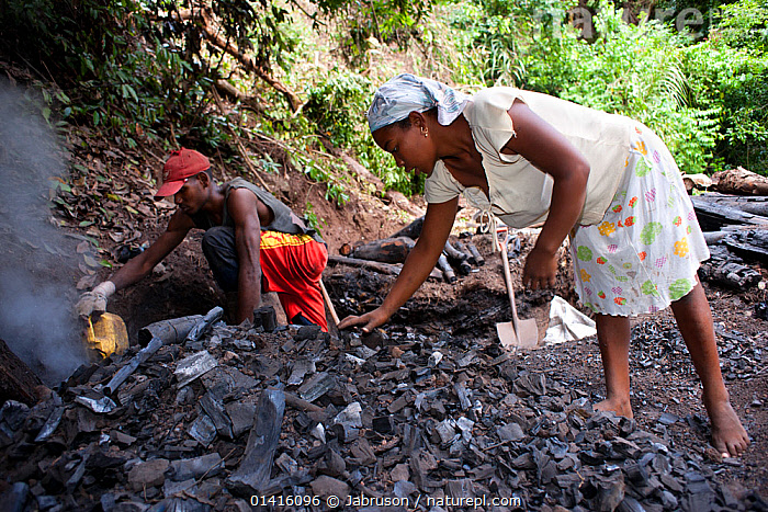 Alequadio Toma & Liticia da Cruz prepare charcoal for collection after its manufacture near the Sao Nicolau Plantation - close to the Obo National Park and the Bom Sucesso Botanic Gardens, Sao Tome, Democratic Republic of Sao Tome and Principe. Lack of viable cooking fuels puts pressure on natural resources. Wood is continually being converted to charcoal for sale to people in Sao Tome and this is an insidious problem throughout the islands of Sao Tome & Principe off the West Coast of Africa. 2009  ,  AFRICA,BRUCE DAVIDSON,BURNING,CENTRAL AFRICA,CHARCOAL,CONSERVATION,COOKING,DEFORESTATION,ENVIRONMENTAL,EXPLOITATION,FEMALES,FUEL,JUVENILE,NATIONAL PARK,NP,PEOPLE,PLANTATION,PRESSURE,RESERVE,RESOURCES,TROPICAL RAINFOREST,WOOD,WORKING,YOUNG  ,  Jabruson