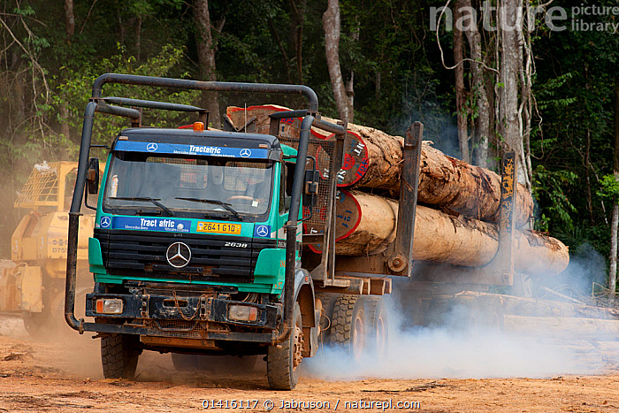 Trucks used for large-scale hardwood timber extraction with hardwood logs being taken from lumber yard located inside the Lope National Park. Onward shipment via sea takes place from Libreville, Gabon. 2009  ,  AFRICA,BRUCE DAVIDSON,CENTRAL AFRICA,DEFORESTATION,ENVIRONMENTAL,EXPLOITATION,EXPORT,FUMES,GABON,HARDWOODS,INDUSTRY,LOGGING,LOGS,NATIONAL PARK,NP,RESERVE,RESOURCES,ROADS,TIMBER,TREES,TROPICAL RAINFOREST,TRUCK,TRUCKS,TRUNKS,VEHICLES,PLANTS  ,  Jabruson