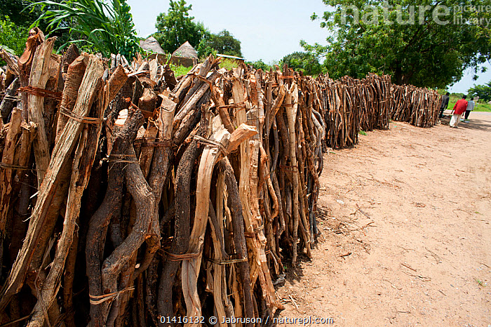 Firewood collected from Waza National Park. Inefficient monitoring and lack of controls allow enterprising merchants to remove and collect wood from the Waza National Park and surrounding hinterland, Cameroon, September 2009  ,  AFRICA,CONSERVATION,DEFORESTATION,ENVIRONMENTAL,FIREWOOD,FORESTS,FUEL,NP,RESERVE,WEST AFRICA,National Park , Bruce Davidson  ,  Jabruson