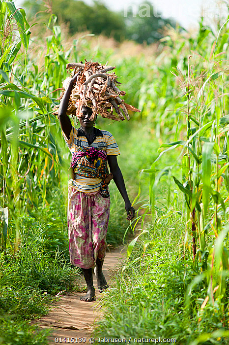 Woman carrying firewood headed into Maroua town for market day, Maroua to Kouserri highway, Cameroon, September 2009  ,  AFRICA,CAMEROON,CARRYING,CROPS,FARMLAND,FIELDS,FIREWOOD,FUEL,MARKETS,PEOPLE,TRADE,VERTICAL,WALKING,WEST AFRICA,WOMAN,WOMEN , Bruce Davidson  ,  Jabruson