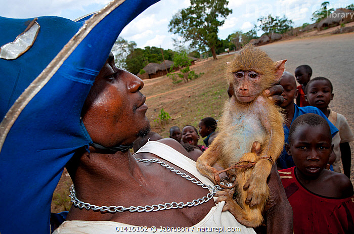 Mozambican man with captive Yellow Baboon youngster (Papio cynocephalus), caught during troop crop raiding, surrounded by children,  Pemba to Montepuez highway, north-eastern Mozambique.  ,  AFRICA,BABOONS,CAPTIVE,CERCOPITHECIDAE,CHILDREN,CRUELTY,ENVIRONMENTAL,FEAR,JUVENILE,MAMMALS,MONKEYS,MOZAMBIQUE,OUTDOORS,PEOPLE,PRIMATES,SAD,SAVANNAH BABOON,VERTEBRATES,YOUNG,Concepts , Bruce Davidson  ,  Jabruson