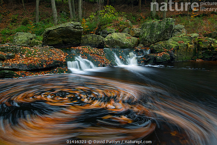 Hoegne river at the edge of the 'Hoge Venen' nature reserve, with autumn leaves swirling in river, Ardennes, Belgium, November, AUTUMN,BELGIUM,BLURRED,EUROPE,FRESHWATER,HABITAT,LANDSCAPES,LEAVES,MOTION,RIVERS,STREAMS,WATER,WATERFALLS,WINTER,WOODLANDS, David Pattyn