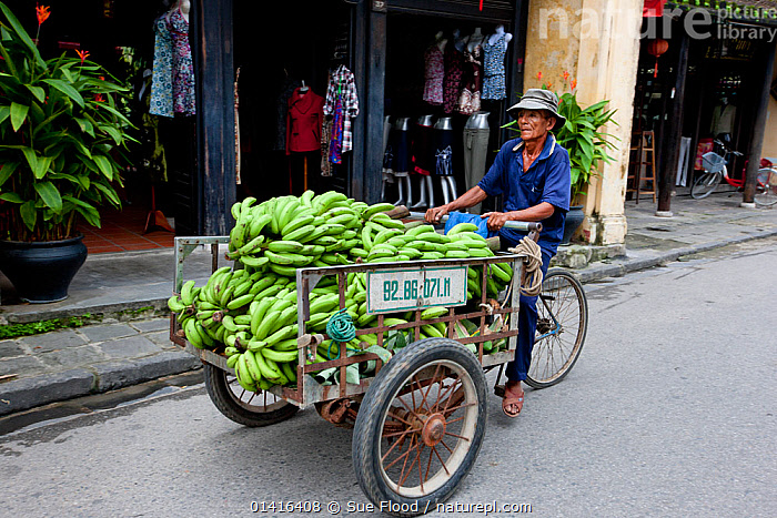Street trader with bananas on bicycle in Hoi An, UNESCO World Heritage Site, Vietnam October 2011  ,  ASIA,BICYCLE,CITIES,CULTURES,FOOD,FRUIT,LANDSCAPES,MALES,MAN,PEOPLE,SOUTH EAST ASIA,STREETS,TRADE,TRADITIONAL,TRANSPORT,UNESCO,URBAN,VIETNAM,WORLD HERITAGE SITE,Plants  ,  Sue Flood