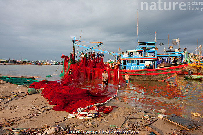 Men sorting fishing nets in fishing boat, Phan Thiet, Vietnam November 2011  ,  ASIA,BOATS,COASTS,CULTURES,FISHING,FISHING BOATS,GROUPS,LANDSCAPES,MEN,NET,NETS,PEOPLE,SOUTH EAST ASIA,TRANSPORT,VIETNAM,WATER,WORKING,WORKING BOATS,SOUTH-EAST-ASIA  ,  Sue Flood