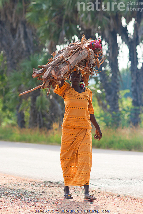 Woman carrying firewood on her  head to Maroua town for market day. Cameroon, September 2009.  ,  AFRICA,CAMEROON,CARRYING,FUEL,OUTDOORS,PEOPLE,PORTRAITS,TRADE,TRADITIONAL,VERTICAL,WEST AFRICA,WOMAN,WOMEN , Bruce Davidson  ,  Jabruson