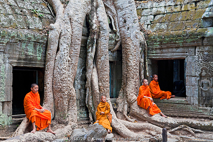 Buddhist monks relaxing at Ta Phrohm Temple, Angkor Wat, Siem Reap, Cambodia 2010. Model released.  ,  ageing process,ancient,angkor,Angkor Wat,ASIA,boys,buddhism,buddhist,CAMBODIA,catalogue5,CULTURES,four people,full length,GROUPS,HISTORICAL,LANDSCAPES,MEN,monks,OLD,outdoors,PEOPLE,Religion,ROOTS,ruins,Siem Reap,SITTING,SOUTH EAST ASIA,Ta Phrohm Temple,teenage boys,temples,TRADITIONAL,Travel,travel destination,TREES,young adult,young men,PLANTS  ,  Gavin Hellier