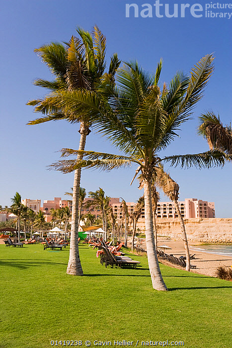 Nature Picture Library - Palm trees at Jissah beach at