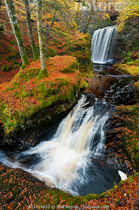 Waterfalls in woodland. Craigengillan Estate, Dalmellington, Ayrshire, October., EUROPE,FORESTS,LANDSCAPES,RIVERS,SCOTLAND,STREAMS,UK,WATERFALLS,WOODLANDS,United Kingdom, Niall Benvie