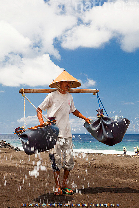 Man collecting black sand in an area which is one of the locations for producing fine restaurant quality salt, most of which is shipped to Japan, Kusimbi Beach, Bali, Indonesia 2009. No release available., ASIA,BALI,BALINESE,BEACHES,CARRYING,COASTS,EXPORT,INDONESIA,INDUSTRY,KUSIMBI,MAN,PEOPLE,PREPARATION,SALT,SAND,SEA,SHORELINE,SOUTH EAST ASIA,TRADE,VERTICAL,WAVES,WORKING,SOUTH-EAST-ASIA,Catalogue5, Michele Westmorland