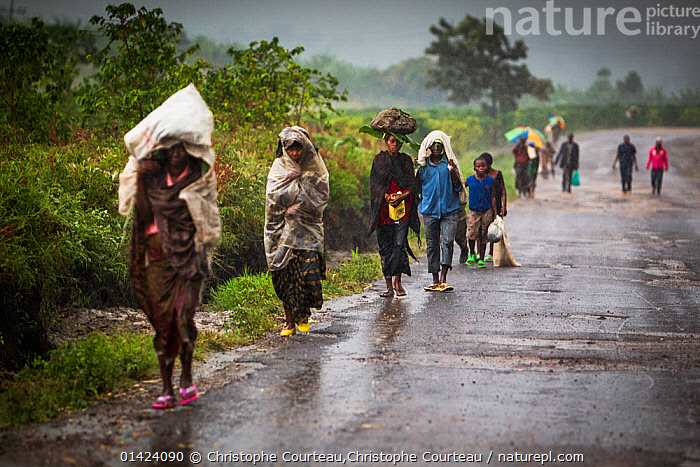 Villagers walking along a road during a heavy rain shower, Virunga National Park, North Kivu Province, Democratic Republic of the Congo, August 2010.  ,  AFRICA,black ethnicity,CARRYING,CENTRAL AFRICA,DRC,GROUPS,NP,outdoors,PEOPLE,RAIN,RAINING,RESERVE,ROADS,WEATHER,catalogue6,DEMOCRATIC REPUBLIC OF THE CONGO,Moving After,Following,Follow,Follows,Walking,Carries,Carry,Carrying On Head,Head Carries,Head Carry,People,African Descent,Female,Woman,Male,On The Move,Group,Group Of People,Large Group Of People,Many,Wet,Africa,Central Africa,Democratic Republic of the Congo,Diminishing Perspective,Front View,View From Front,Roadside,Roadsides,Road,Weather,Raining,Rain,Outdoors,Open Air,Outside,Day,Bad Weather,Severe weather,Verges,Verge,Local people,Moving,Virunga National Park,Villager,North Kivu Province,National Park  ,  Christophe Courteau,Christophe Courteau
