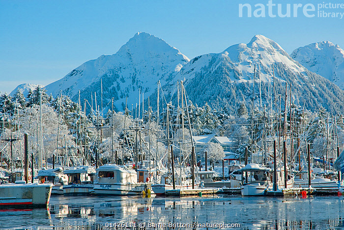 Snow covered fishing boats in Sitka Harbour, Alaska. Photograph taken on location for BBC TV series 'Nature's Great Events', March 2008.  ,  alaska,BOATS,COASTS,FISHING BOATS,FLEETS,HARBOURS,LANDSCAPES,MOORED,MOUNTAINS,NORTH AMERICA,SNOW,USA,WINTER,WORKING BOATS,catalogue6,USA,Moored,Docked,Mooring,Moorings,No One,Nobody,North America,USA,Western USA,Alaska,Harbour,Boat,Boats,Fishing Boat,Fisherboat,Fisherboats,Fishing Boats,Mast,Masts,Mountain,Snow,Outdoors,Open Air,Outside,Winter,Day,Working boats,Boat Part,View to land,Group of objects,Sitka  ,  Barrie Britton,Barrie Britton