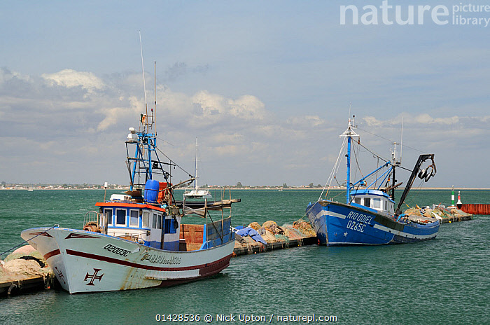 Fishing boats moored at Culatra island harbour. Parque Natural da Ria Formosa, near Olhao, Algarve, Portugal, June.  ,  BOATS,EUROPE,FISHING BOATS,HARBOURS,JETTIES,LANDSCAPES,MOORED,NP,PORTUGAL,SEASCAPES,TWO,WORKING BOATS,National Park  ,  Nick Upton