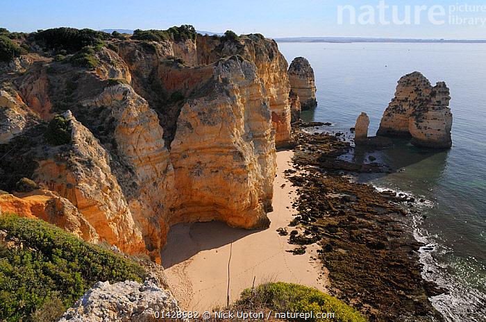 Weathered sandstone cliffs and sea stacks at Ponta da Piedade. Lagos, Algarve, Portugal, June 2012.  ,  BEACHES,CLIFFS,COASTS,EROSION,EUROPE,GEOLOGY,LANDSCAPES,PORTUGAL,ROCK FORMATIONS,SEASCAPES  ,  Nick Upton