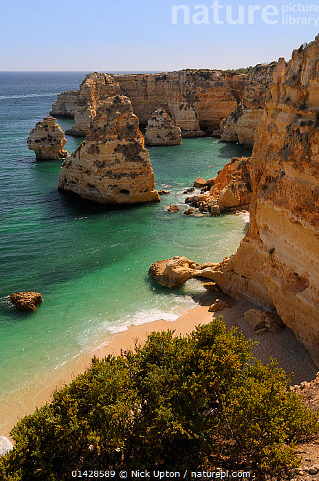 Overview of beach, sandstone cliffs, sea stacks and rock arch at Praia da Marinha. Near Carvoeiro, Algarve, Portugal, June 2012.  ,  BEACHES,CLIFFS,COASTS,EROSION,EUROPE,GEOLOGY,LANDSCAPES,PORTUGAL,SEASCAPES,VERTICAL  ,  Nick Upton