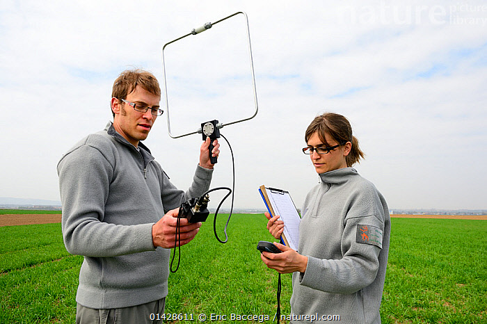Scientists from the French Wildlife Department (ONCFS) radio tracking the common hamster (Cricetus cricetus) in a wheat field, Alsace, France, April 2013  ,  ALSACE,CONSERVATION,CRICETIDAE,CROPS,EUROPE,FARMLAND,FRANCE,HAMSTERS,MAMMALS,MAN,PEOPLE,RADIOTRACKERS,RESEARCH,RODENTS,SCIENCE,VERTEBRATES,WHEAT,WOMAN  ,  Eric Baccega