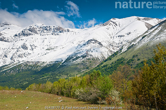 View of Gran Sasso the road from L'Aquila, Appennines, Abruzzo, Italy, June  ,  ALPINE,APPENNINE,EUROPE,FLOWERS,ITALY,LANDSCAPES,MOUNTAINS,SNOW,Apennines,Appennines,  ,  Paul Harcourt Davies