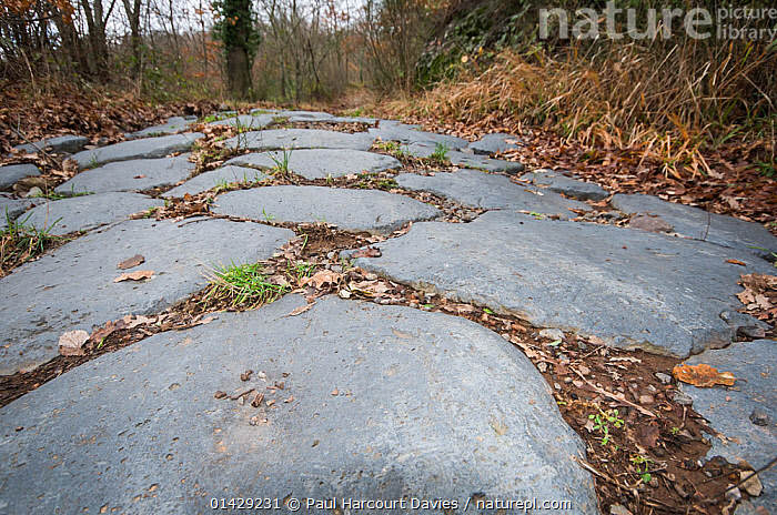 Ancient Roman road made in Basalt near Bolsena, Lazio. Italy, September  ,  ANCIENT,ANCIENT ROME,EUROPE,HISTORICAL,ITALY,OLD,PATHS,ROADS,ROMAN  ,  Paul Harcourt Davies