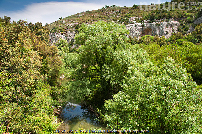 Ferla old railway line Sicily, a superb orchid habitat, Sicily, Italy, May 2011  ,  EUROPE,HABITAT,ITALY,LANDSCAPES,MEDITERRANEAN,ORCHIDS,RAILWAYS,WOODLANDS  ,  Paul Harcourt Davies