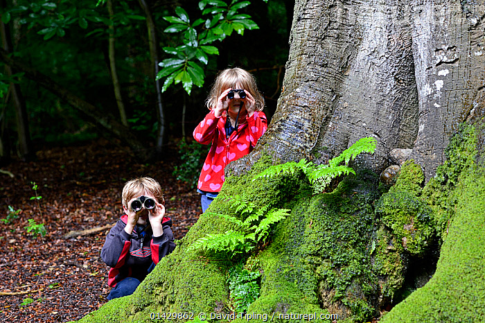 Young brother and sister bird watching in woodland in summer, Norfolk. July 2012. Model Released Model released.  ,  catalogue6,ENGLAND,Looking Through Objects,See Through,Bird Watching,Birdwatching,Ornithology,People,Child,Children Only,Female,Male,Family,Sibling,Siblings,Brother,Brothers,Sister,Sisters,Patience,2 People,Two Person,Two Persons,Europe,Western Europe,UK,Great Britain,England,Norfolk,Plant,Tree Trunk,Equipment,Binocular,Binoculars,Outdoors,Open Air,Outside,Day,Nature,Natural,Natural World,Woodland,Forest,Wildlife watching,United Kingdom  ,  David Tipling