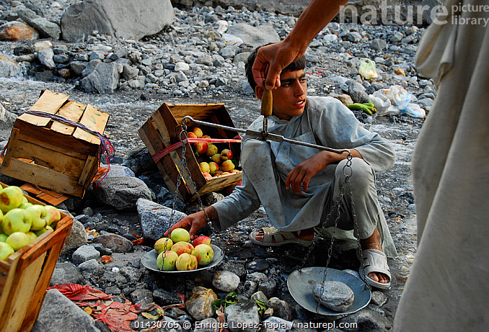 Fruit peddlers weighing apples for sale alongside the Karakoram Highway, Pakistan, July 2007., ASIA,ASIAN ETHNICITY,BOY,FRUIT,HIMALAYA,HIMALAYAS,INDIAN SUBCONTINENT,KARAKORAM,MOUNTAINS,OUTDOORS,PEOPLE,TRADE,UPLANDS,Plants, Enrique Lopez-Tapia