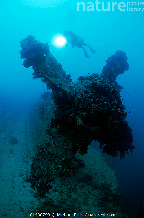Diver on the propellor of the 'Heian Maru' large cargo vessel sunk at Chuuk Lagoon during Operation Hailstone 17/18th February 1944, Chuuk Lagoon, Federated States of Micronesia, DIVERS,DIVING,LEISURE,MARINE,PACIFIC ISLANDS,PEOPLE,TROPICAL,UNDERWATER,VERTICAL,WATER PURSUITS,WRECKS,MICRONESIA, Michael Pitts