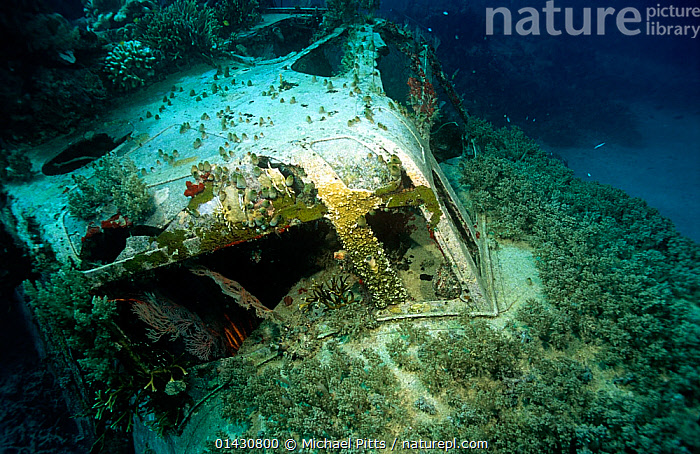Wreck of 'Kawanishi H8K' (Codename: 'Emily' by the Allies) Japanese flying boat. Shortland Islands, Solomons.  ,  AIRCRAFT,BOATS,FLYING BOAT,MARINE,MELANESIA,PACIFIC ISLANDS,PACIFIC OCEAN,SEAPLANE,SOLOMON ISLANDS,TROPICAL,UNDERWATER,WORKING BOATS,WRECKS  ,  Michael Pitts