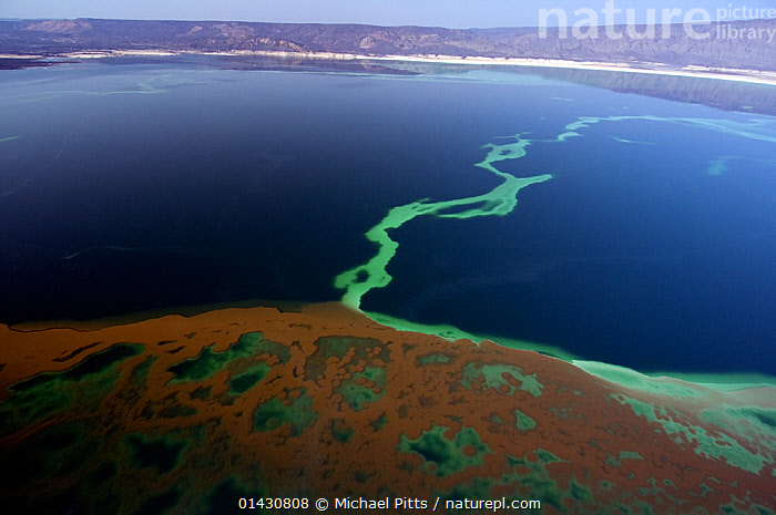 Lake Assal shoreline -  Africas lowest point at 515 feet below sea level, Djibouti, March 2008  ,  AERIALS,AFRICA,BIODIVERSITY HOTSPOT,BIODIVERSITY HOTSPOTS ,BLUE,EAST AFRICA,ELEVATED VIEW,HIGH ANGLE SHOT,HORN OF AFRICA,LAKES,LANDSCAPES,PATTERNS,SALINE,SALT,WATER,EAST-AFRICA  ,  Michael Pitts
