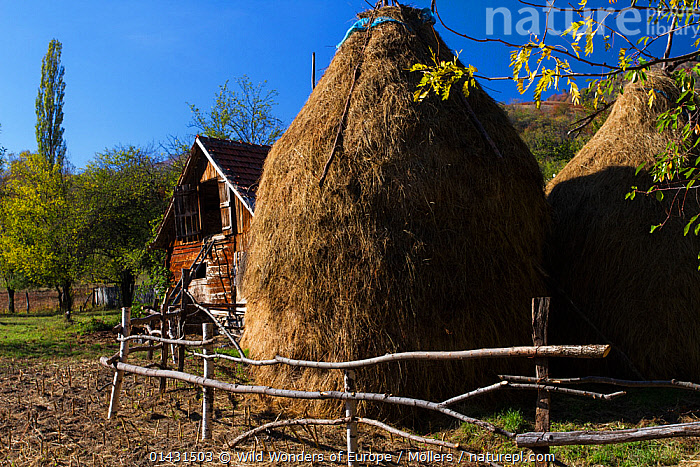 Traditional hay stacks at farm house in the village of Isverna. Mehedinti Plateau Geopark, Isverna, Romania, October 2012, AGRICULTURE,BUILDINGS,CROPS,EASTERN EUROPE,HORIZONTAL,EUROPE,FARMING,FLORIAN MOELLERS,HAY,REWILDING,ROMANIA,WWE, Wild Wonders of Europe / Möllers
