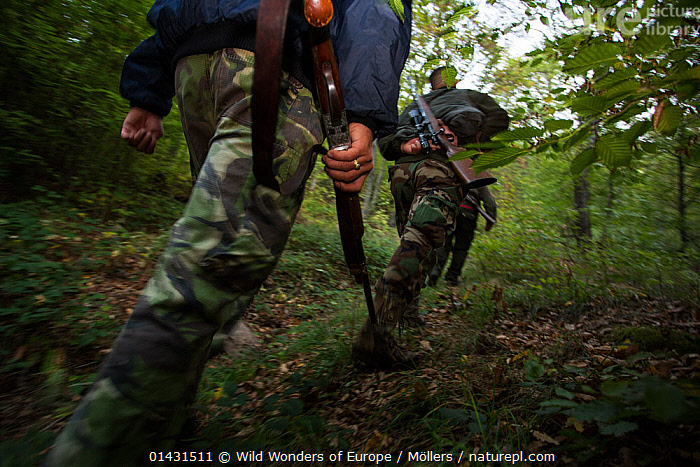 Romanian hunters during a driving hunt for Wild boar (Sus scrofa) in the forest area outside the village of Mehadia, Caras Severin, Romania, October 2012  ,  CAMOUFLAGE,EASTERN EUROPE,GUNS,HORIZONTAL,PEOPLE,TROUSERS,VERTEBRATES,ARTIODACTYLA,EUROPE,FLORIAN MOELLERS,FORESTS,HUNTING,LEGS,MAMMALS,MEN,PIGS,REWILDING,ROMANIA,SUIDAE,WWE  ,  Wild Wonders of Europe / Möllers