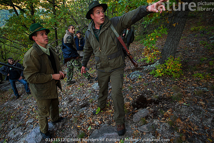 Romanian forester pointing out stand to a fellow hunter during a driving hunt for Wild boar (Sus scrofa) in the forest area outside the village of Mehadia, Caras Severin, Romania, October 2012, CAMOUFLAGE,EASTERN EUROPE,GUNS,HORIZONTAL,PEOPLE,VERTEBRATES,ARTIODACTYLA,COMMUNICATION,EUROPE,FLORIAN MOELLERS,FORESTS,GROUPS,HUNTING,MAMMALS,MEN,PIGS,REWILDING,ROMANIA,SUIDAE,WWE, Wild Wonders of Europe / Möllers