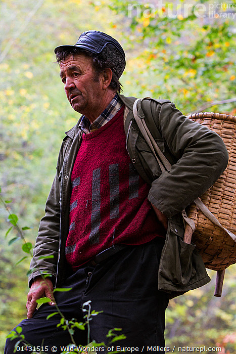Romanian man with woven basket on his back for carrying edible tree mushrooms - mostly from Common beech (Fagus sylvatica) - picked in the forest close to Baile Herculane, Caras Severin, Carpathians, Romania, October 2012, EASTERN EUROPE,FORAGING,FUNGI,MUSHROOMS,EUROPE,FLORIAN MOELLERS,MAN,PORTRAITS,REWILDING,ROMANIA,VERTICAL,WWE, Wild Wonders of Europe / Möllers