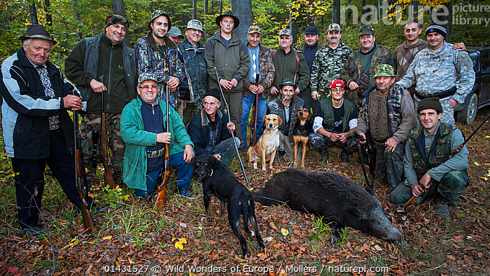 Group of Romanian hunters posing with the only Wild boar (Sus scrofa) shot during a driving hunt in the forest area outside the village of Mehadia, Caras Severin, Romania, October 2012, DECEASED,EASTERN EUROPE,HORIZONTAL,PEOPLE,VERTEBRATES,ARTIODACTYLA,DEATH,EUROPE,FLORIAN MOELLERS,GROUPS,HUNTING,MAMMALS,PIGS,PORTRAITS,REWILDING,ROMANIA,SUIDAE,WWE, Wild Wonders of Europe / Möllers