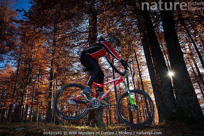 Mountain biker performing a jump in the Common beech (Fagus sylvatica) forest of the Tarcu Mountains Natura2000 site. Southern Carpathians, Muntii Tarcu, Caras-Severin, Romania, October 2012, CYCLING,DICOTYLEDONS,EASTERN EUROPE,JUMPING,PEOPLE,PROFILE,AUTUMN,EUROPE,FAGACEAE,FLORIAN MOELLERS,FORESTS,MAN,OUTDOOR PURSUITS,PLANTS,REWILDING,ROMANIA,TREES,WWE, Wild Wonders of Europe / Möllers