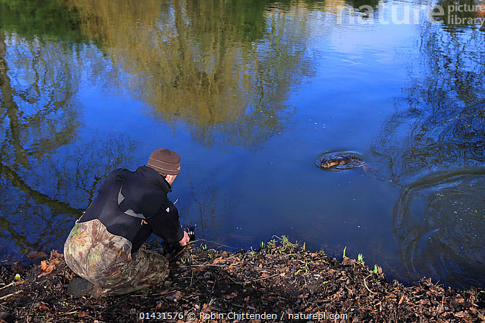 Photographer taking photograph of Common Otter (Lutra lutra) Thetford, Norfolk, UK, March  ,  CARNIVORES,ENGLAND,PEOPLE,RIVERS,UK,VERTEBRATES,EUROPE,MAMMALS,MUSTELIDAE,OTTERS,PHOTOGRAPHERS,PHOTOGRAPHY,SWIMMING,United Kingdom,Mustelids  ,  Robin Chittenden