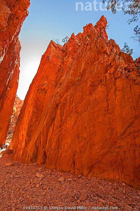 Standley Chasm - a sandstone canyon or gorge,  MacDonnel Ranges, Northern Territory, Australia, June 2010  ,  AUSTRALIA,CANYON,GEOLOGY,LANDSCAPES,SANDSTONE,AUSTRALASIA,CLIFFS,GORGES,NORTHERN TERRITORY ,ROCK FORMATIONS,VERTICAL  ,  Steven David Miller