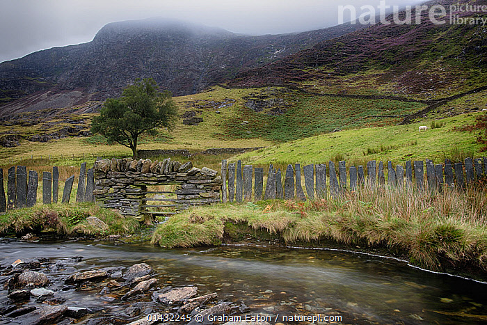 A slate fence alongside a stream on the Watkins Path to Snowdon, Wales, February 2012  ,  FRESHWATER,LANDSCAPES,MOUNTAINS,STREAMS,UK,BAD WEATHER,CLOUDS,COUNTRYSIDE,EUROPE,FENCES,SLATE,WALES,WATER,Weather,United Kingdom  ,  Graham Eaton