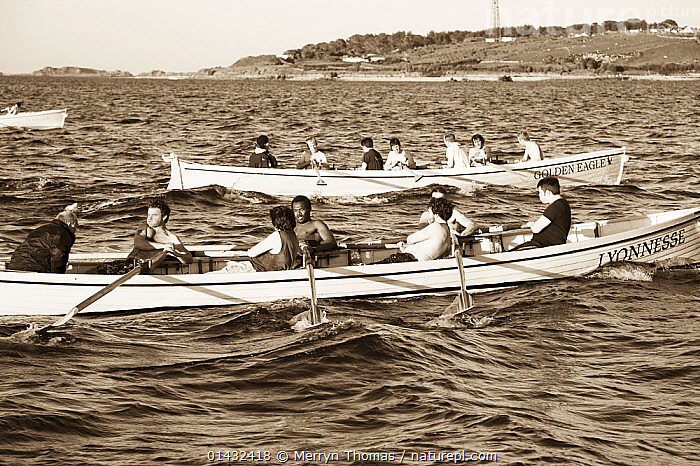 Gig race into St Mary's, Scilly Isles, Cornwall, England, May 2012.  ,  BOATS,CORNWALL,CREWS,EUROPE,OPEN BOATS,OUTDOORS,ROWING BOATS,MONOCHROME,PEOPLE,PROFILE,RACES,RACING,UK,ENGLAND,BRITISH ISLES,United Kingdom  ,  Merryn Thomas