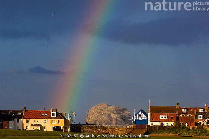Rainbow and storm clouds over coastal town of North Berwick, with Bass Rock in the distance, which is the breeding ground for 140,000 gannets, Firth of Forth, Scotland, UK, May  ,  BIRDS,BUILDINGS,COLONIES,EUROPE,GANNETS,ISLANDS,MORUS BASSANUS,RAINBOWS,SCOTLAND,SEABIRDS,SULIDAE,TOWNS,UK,VERTEBRATES,VILLAGES,WEATHER,United Kingdom  ,  Andrew Parkinson