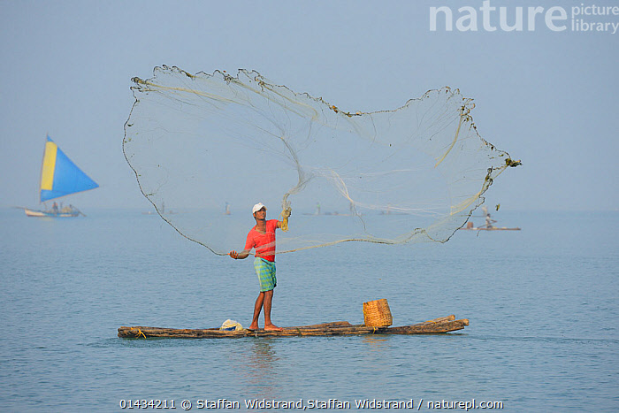 Throw-net fisherman, on raft, Pulicat Lake, Tamil Nadu, India, January 2013.  ,  boat,FISHING,HORIZONTAL,india,PEOPLE,Photoshelter,WATER,catalogue6,Throwing,Throw,Toss,Tossed,Tosses,Tossing,Winding Up,Standing,People,Adult,Adults,Mid Adult,Mid Adults,Mid Adult,Mid Adults,Male,Man,Only Men,One Man,Mid Adult Men,Mid Adult Man,Mid Adult Men,Occupation,Fisherman,Fishermen,Fishers,Effort,Exertion,Trying,Skill,1 Person,Single,Single Person,Asia,Indian Subcontinent,India,Full Length,Full Lengths,Whole,Horizontal,Object,Net,Nets,Netting,Land Vehicle,Boat,Boats,Raft,Floating Platform,Floating Platforms,Rafts,Sailboat,Sail Boat,Sail Boats,Sailboats,Sailing Boat,Sailing Boats,Coastlines,Lagoons,Fishing Industries,Coast,Freshwater,Lake,Coastal,Open boat,Open boat,Open boats,Fisheries,Fishery,Local people,Local Industry,Subsistence,Throw net,,Skill,Efficiency  ,  Staffan Widstrand,Staffan Widstrand