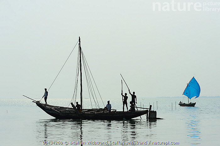 Fishermen in boats, Pulicat Lake, Tamil Nadu, India, January 2013., boat,FISHING,HORIZONTAL,india,PEOPLE,Photoshelter,catalogue6,People,Fisherman,Fishermen,Fishers,Teamwork,Colour,Blue,Group,Group Of People,Medium Group Of People,No One,Nobody,Asia,Indian Subcontinent,India,Copy Space,Profile,Horizontal,Back Lit,Backlit,Land Vehicle,Boat,Boats,Fishing Boat,Fisherboat,Fisherboats,Fishing Boats,Sailboat,Sail Boat,Sail Boats,Sailboats,Sailing Boat,Sailing Boats,Mast,Masts,Sail,Horizon,Horizon Over Water,Coastlines,Sky,Clear Sky,Lagoons,Weather,Overcast,Outdoors,Open Air,Outside,Day,Coast,Freshwater,Marine,Lake,Coastal,Working boats,Saltwater,Sea,Boat Part,Local people,Negative space,Local Industry,Departure, Staffan Widstrand,Staffan Widstrand