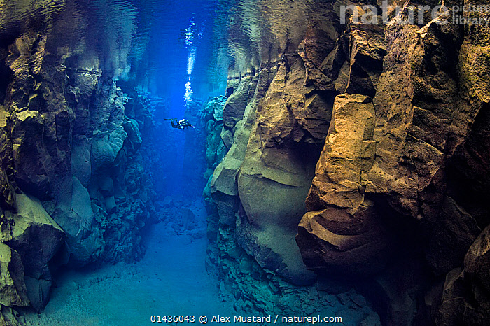 A diver explores Silfra Canyon, a deep fault filled with fresh water in the rift valley between the Eurasian and American tectonic plates at Thingvellir National Park, Iceland. May 2011.  In this photo the American plate is on the left and the Eurasian plate on the right. No release available., ©,alexander,ATLANTIC,ICELAND,mustard,north,OCEAN,Silfra,Thingvellir,www.amustard.com,catalogue6,Leisure,Underwater Diving,Scuba Diving,People,Male,Man,Only Men,One Man,Contrasts,Scale,Proportion,Distant,Distance,1 Person,Single,Single Person,Size,Small,Little,Tiny,Europe,Northern Europe,North Europe,Nordic Countries,Scandinavia,Iceland,Horizontal,Canyons,Rock Formations,Bubble,Exploration,Freshwater,Underwater,Cold Water,Reserve,Geology,Protected area,National Park,Coldwater,Discovery,The Unknown,Tectonic plates,Thingvellir National Park,Silfra Canyon,Tectonic Plate,Fault,Marine,Wonder,Spectacular, Alex Mustard,Alex  Mustard