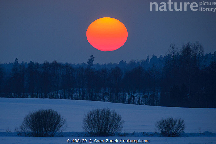 Large orange setting sun over a snowy field, Southern Estonia, February 2013  ,  BALTIC,COLD,EASTERN EUROPE,ESTONIA,EUROPE,GLOWING,LANDSCAPES,NORTHERN EUROPE,SNOW,SUNSET,WINTER  ,  Sven Zacek