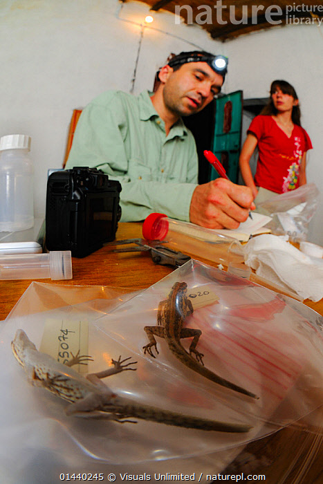 Researchers cataloging specimens for DNA analysis, Socotra archipelago Island, Socotra, Yemen.  ,  ARABIA,ASIA,INDOORS,ISLANDS,PEOPLE,RESEARCH,SCIENTIFIC,SPECIMENS,STUDYING,SURVEY,VERTICAL,WORKING  ,  Visuals Unlimited