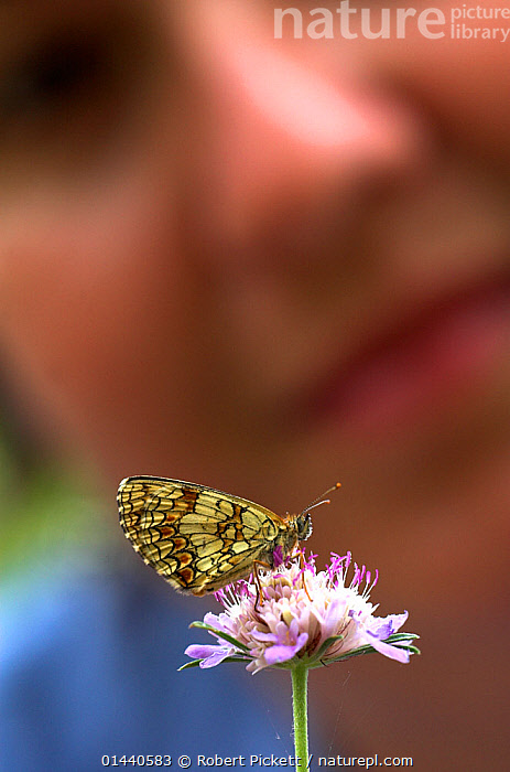 Woman watching a Heath Fritillary Butterfly (Mellicta athalia) sitting on a flower, Provence, France  ,  UNCATALOGUED,Animal,Wildlife,Arthropod,Insect,Brushfooted butterfly,Fritillary,Heath fritillary,Animalia,Animal,Wildlife,Hexapoda,Arthropod,Invertebrate,Hexapod,Arthropoda,Insecta,Insect,Lepidoptera,Lepidopterans,Nymphalidae,Brushfooted butterfly,Fourfooted butterfly,Nymphalid,Butterfly,Papilionoidea,Melitaea,Fritillary,Melitaea athalia,Heath fritillary,Papilio athalia,Mellicta neglecta,Mellicta athalia,Pollination,People,Woman,Europe,Western Europe,France,Provence Alpes Cote D&#39,Azur,Provence,Plant,Flower,,,Dispersal,  ,  Robert Pickett