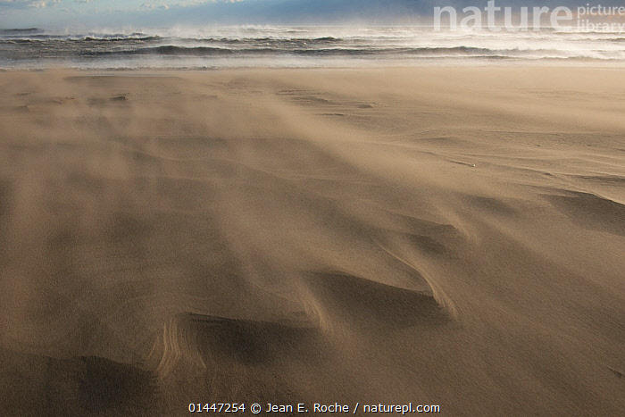 Wind blowing sand across beach, causing delta patterns, Piemanson, Camargue, France, October., catalogue6,Atmospheric Mood,Atmospheric,Motion,Active,Movement,Mystery,Mysterious,No One,Nobody,Pattern,Patterned,Patterns,Natural Pattern,Natural Patterns,Europe,Western Europe,France,Bouches Du Rhone,Bouches Du Rhne,Bouches Du Rhone,High Angle View,Windy,Coastlines,Beach,Sandy Beach,Sandy Beaches,Soil,Dirt,Soils,Dust,Dusty,Sands,Wave,Weather,Outdoors,Open Air,Outside,Day,Physical Geography,Coast,Coastal,View to sea,Elevated view,Piemanson, Jean E. Roche