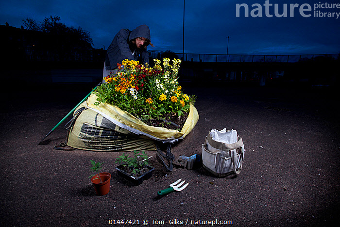 Guerrilla Gardener planting a flowerbed in a one ton sandbag at night. Model released.  ,  guerilla gardener;guerilla gardening;urban;garden;gardening;urban guerilla;planting;flowers;night;night time;city;creating a garden;illicit cultivation;political gardener;land ownership;land rights;flower garden;activism;activist;green;environmentalist;concrete jungle;direct action high1314,Planting,Standing,People,Male,Man,Only Men,One Man,1 Person,Single,Single Person,Campaign,Campaigning,Europe,Western Europe,UK,Great Britain,Plant,Flower,Equipment,Gardening Equipment,Gardening Tools,Tool,Tools,Garden Fork,Clothing,Top,Tops,Hooded Top,Hooded Tops,Settlement,City,Road,Sandbag,Sandbags,Outdoors,Open Air,Outside,Night,Environment,Environmental Issues,Hobby,Hobbys,Pastime,Pastimes,Ideas,Horticulture,Gardening,Guerilla gardening,Direct action,Hand Fork,Ton Bag  ,  Tom  Gilks