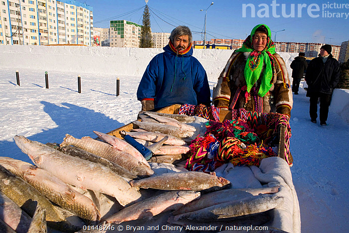 Nenets fisherman, Timophey Salinder & his wife Tatiana selling fish & Nenets handicrafts at a festival in Nadym. Yamal, Northwest Siberia, Russia  ,  Bryan  and Cherry Alexander
