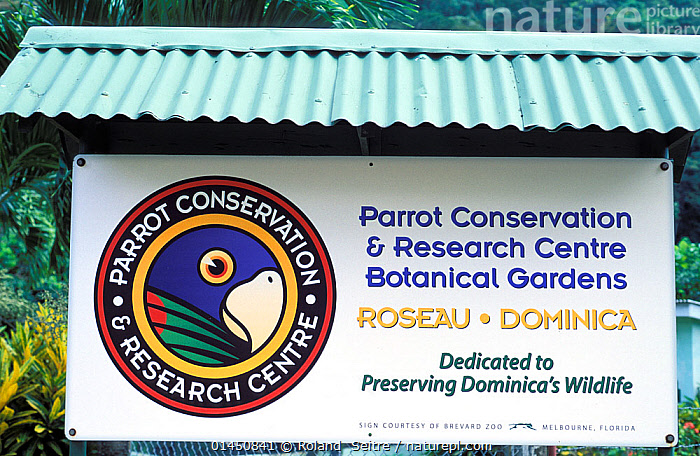 Sign for Parrot Conservation and Research Centre, which conserves two endemic species of parrot the Imperial amazon (Amazona imperialis) and the Red-necked Amazon (Amazona arausiaca) Roseau, Dominica, West Indies.  ,  ANIMAL,VERTEBRATE,BIRDS,PARROT,TRUE PARROT,IMPERIAL AMAZON,RED NECKED AMAZON,ANIMALIA,ANIMAL,WILDLIFE,VERTEBRATE,CHORDATE,AVES,BIRDS,PSITTACIFORMES,PARROT,PSITTACINES,PSITTACIDAE,TRUE PARROT,PSITTACOIDEA,AMAZONA,AMAZONA IMPERIALIS,IMPERIAL AMAZON,IMPERIAL PARROT,DOMINICAN AMAZON,AUGUST AMAZON,SISSEROU,AMERICAS,THE CARIBBEAN,CARIBBEAN,CARRIBBEAN,CARRIBEAN,WEST INDIES,HORIZONTAL,CONSERVATION,CARIBBEAN ISLANDS,BIODIVERSITY HOTSPOTS,BIODIVERSITY HOTSPOT,RED NECKED AMAZON,ENDANGERED SPECIES,THREATENED,ENDANGERED,ENDEMIC,VULNERABLE,THREATENED  ,  Roland  Seitre